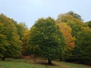 درختان خاص مازی چال