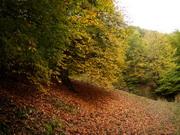 پاییز هزار رنگ مازی چال