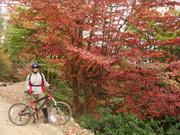 جنگل سرآبرود رنگارنگ