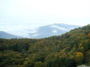 بلندای زیبای جنگل های کلاردشت