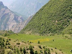 تلفیقی از کوهستان به جنگل
