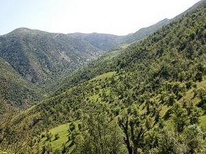 منطقه کوهستانی به جنگلی