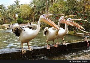 پرندگان باغ گلشن طبس